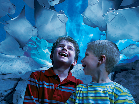 7 verified The Florida Aquarium coupons and promo codes as of Nov Popular now: Up to 21% Off When You Purchase Tickets Online. Trust altamira.ml for Tickets & Events savings.
