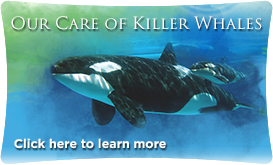 SW-knowyourstars-killerwhales