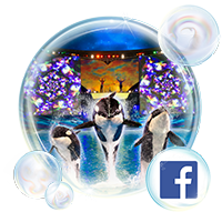 SeaWorld San Antonio Facebook