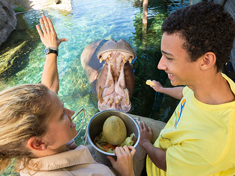Summer resident camps at busch gardens tampa florida - Busch gardens florida resident pass ...