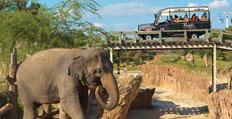 Rhino Rally Busch Gardens