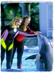 I want to become a sea world trainer?!!!?