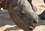 Rhino_02_92x64