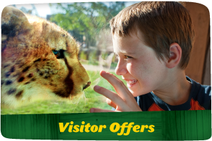 Visitor Offers