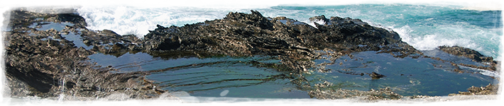 Tide pools intertidal ecology seaworld parks for Ecosystem pool