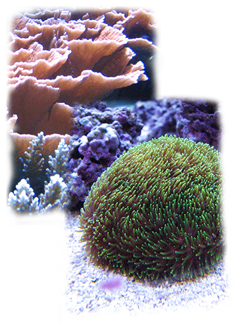 Coral Coral Reefs Infobook Seaworld Parks Entertainment